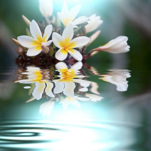 Patience shown by flowers reflected in a quiet pool.