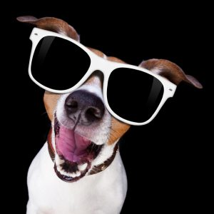 cool sunglasses dog