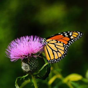 butterfly and flower on retreat