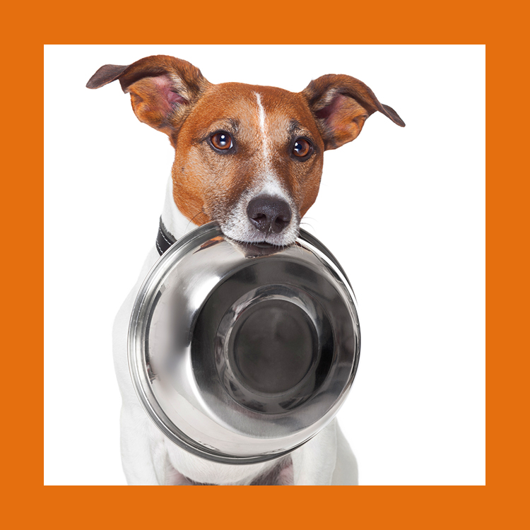 Fasting dog with feedbowl